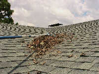 Leaf Pine Needle Roof Rake Pine Needles From Roof